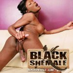 Black Shemale X